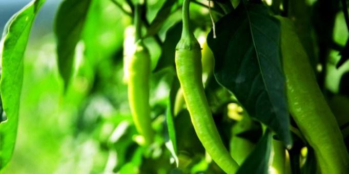 Poziv Zainteresovanim Poljoprivrednim Proizvođačima